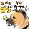 うちの雑種犬ゴンさんがダサかわいい